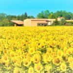 La Provence, région du Pub de Carqueiranne