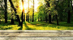 terrassement nature
