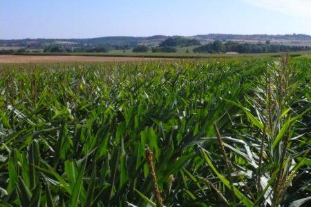 La production du maïs en France